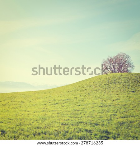Meadow on the Background of Snow-capped Alps in Switzerland, Instagram Effect - stock photo