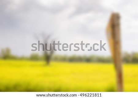 Meadow saffron Natural blurred background.
