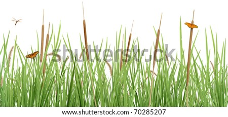 Meadow Scene on White - stock photo