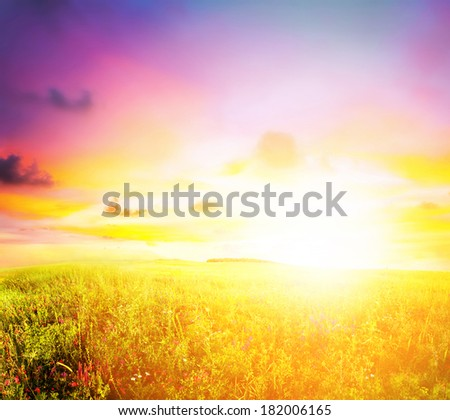 meadow sunset - stock photo