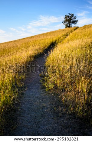 Meadow Trail at Theodore Roosevelt Wilderness - stock photo