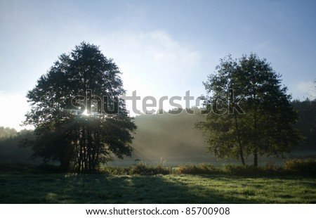 Meadow, tree and sunlight