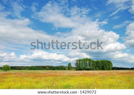 Meadow, trees and blue sky