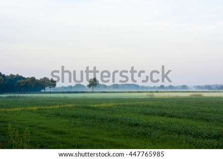 Meadow trees and fog in the background