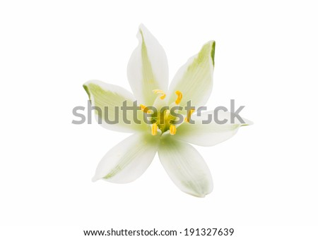 meadow white flowers on a white background - stock photo