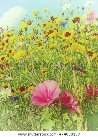 meadow with a lot of colored flowers in vintage view
