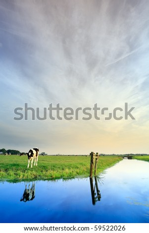 Meadow with canal and cow under cloudy sky, the Netherlands - stock photo