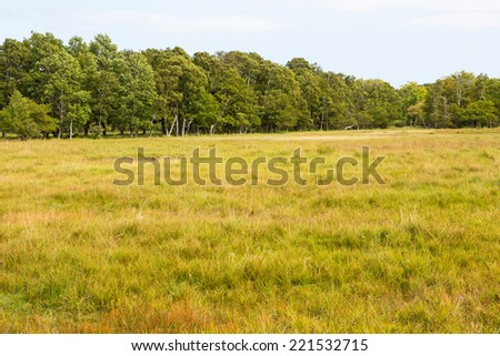 Meadow with deciduous forest on the horizon - stock photo