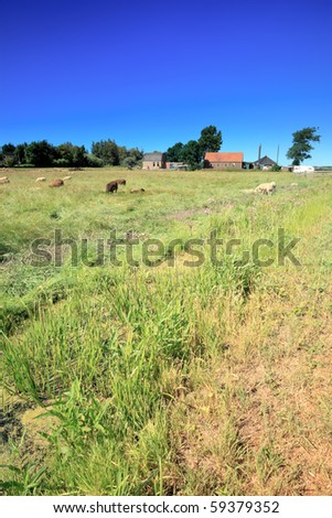 Meadow with dutch farm and sheep - stock photo