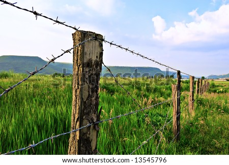 Meadow with fence