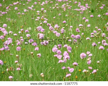 meadow with flowers - stock photo
