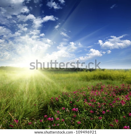 Meadow with flowers and sunshine - stock photo