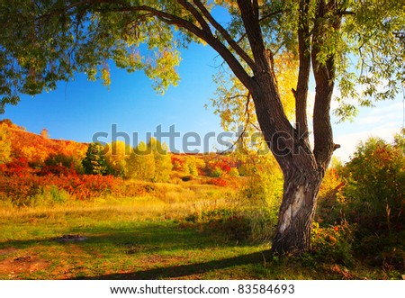 Meadow with grass and big autumn tree with blue sky - stock photo