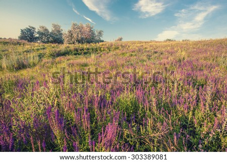 Meadow with green grass and blue sky with clouds, retro color. - stock photo
