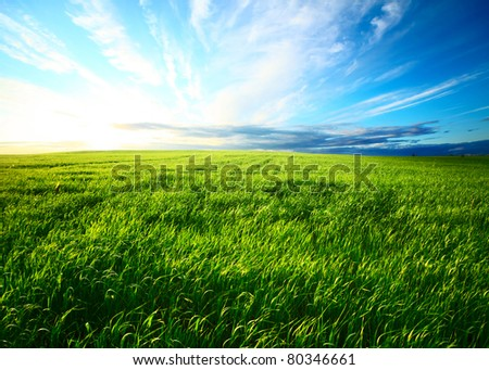Meadow with green grass and blue sunset sky with clouds - stock photo