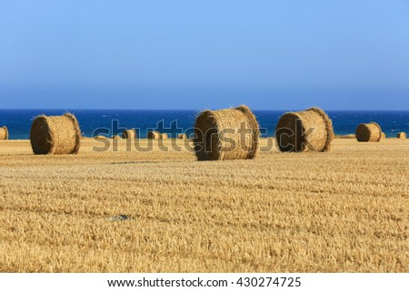 meadow with hay rolls on sea background