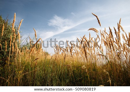 Meadow with high grass