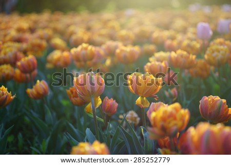 Meadow with orange flowers - stock photo