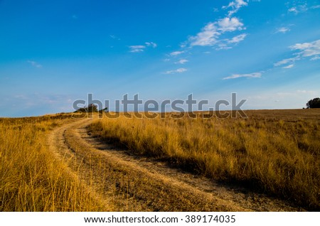Meadow with road, yellow dry grass and blue sky. - stock photo