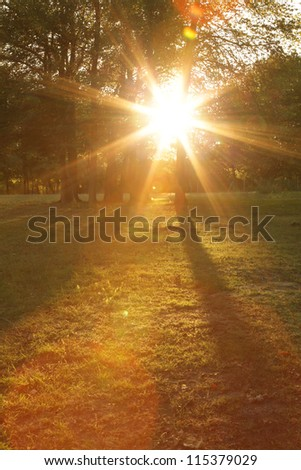 meadow with trees in autumn and sunlight - stock photo