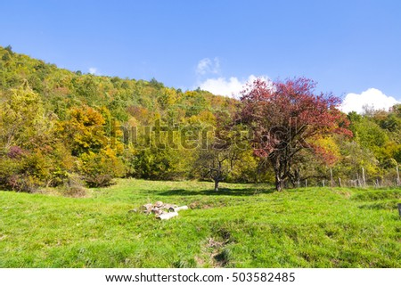 Meadow with trees with autumn colors/ autumn/ trees/ colurs/ green/ meadow