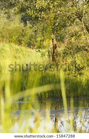 Meadow with water - stock photo