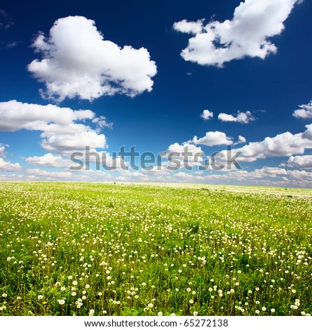 Meadow with wild herbs and blue sky with clouds - stock photo