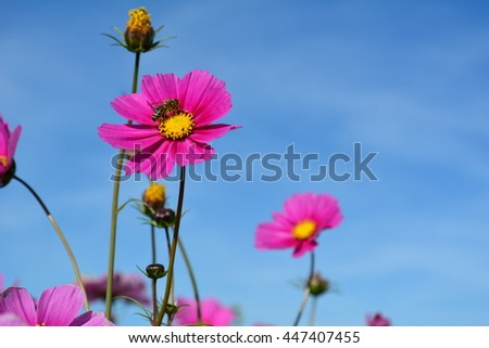 Meadow with wild pink and lilac colored flowers and one bee on a blue sky - stock photo