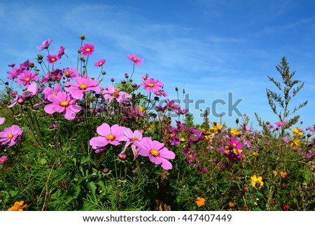 Meadow with wild pink and lilac colored flowers on a blue sky - stock photo