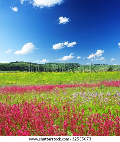 Meadow with wild pink flowers under blue sky with clouds - stock photo