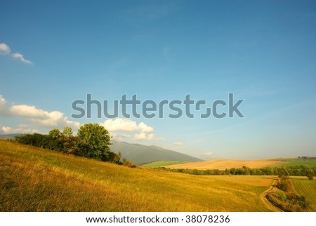 meadows and fields with a path in evening light