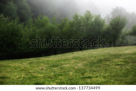 meadows,tree and fog