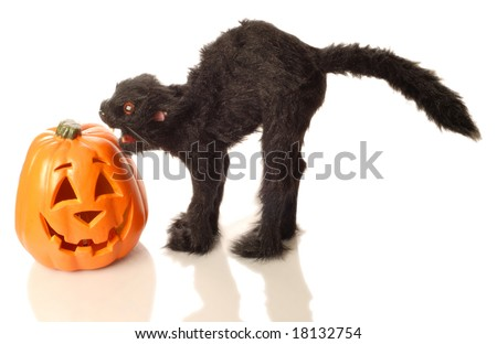 mean black cat and orange pumpkin isolated on white background - stock photo