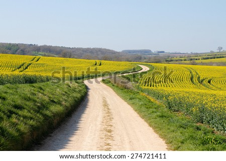 Meandering foot path dirt track winding through farmland, fields of bright yellow rape seed oil crops in English countryside. Concepts looking forward, twists and turns, long road ahead, direction - stock photo