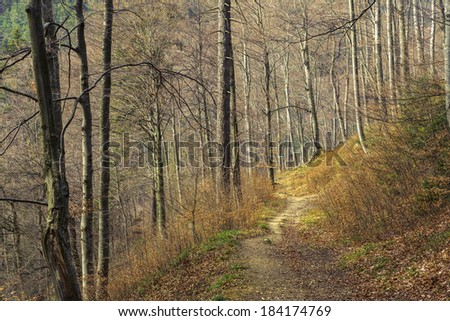 Meandering foot trail in dense deciduous forest in the spring, near Brasov city, Romania. - stock photo