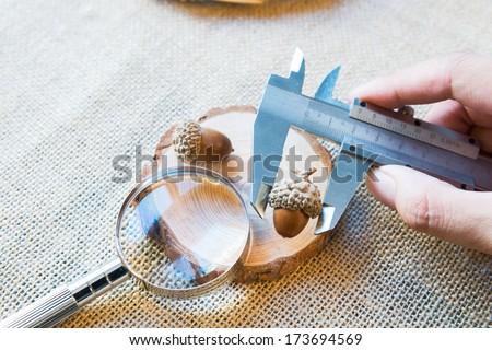 Measure an acorn with metal vernier caliper  - stock photo