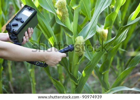 measuring radiation levels of corn - stock photo