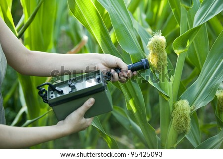 Measuring radiation levels of corn - stock photo