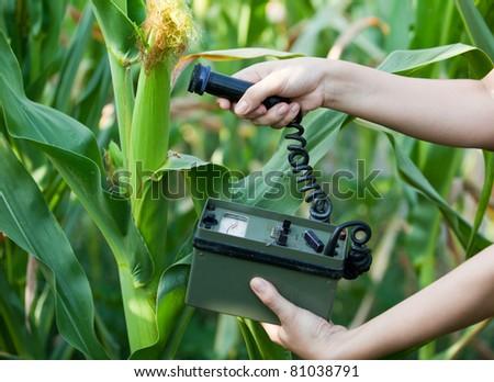 Measuring radiation levels of maize - stock photo