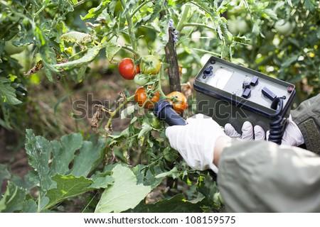 Measuring radiation levels of tomato - stock photo