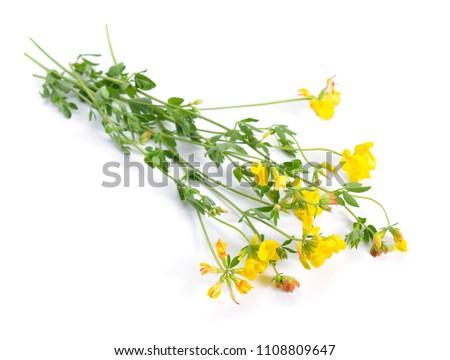 Medicago falcata common names include yellow stock photo image medicago falcata its common names include yellow lucerne sickle alfalfa yellow flowered alfalfa mightylinksfo