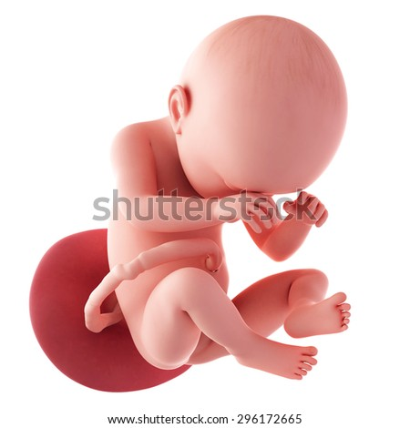 medical accurate illustration of a fetus - week 38 - stock photo