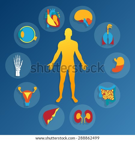 Medical background.Human anatomy. - stock photo