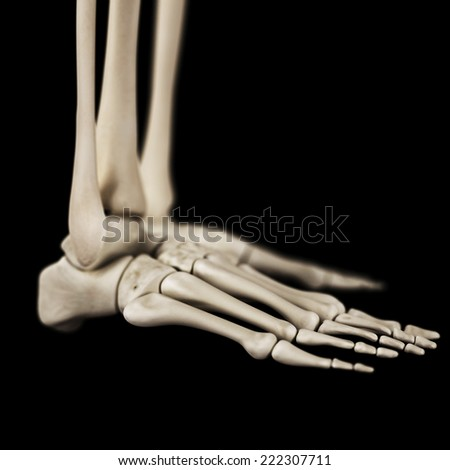 medical 3d illustration of the foot bones