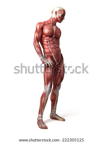 Nude male medical illustration gay the 7