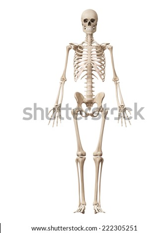 medical 3d illustration of the male skeleton - stock photo