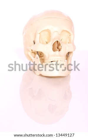 Medical learning skull laying on a white background - stock photo