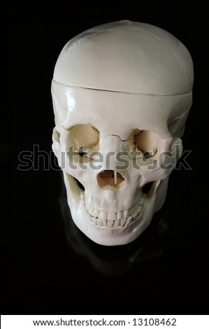 Medical learning skull on a black background - stock photo