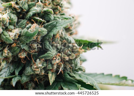 medical marijuana, plant flowers, close-up, cannabis