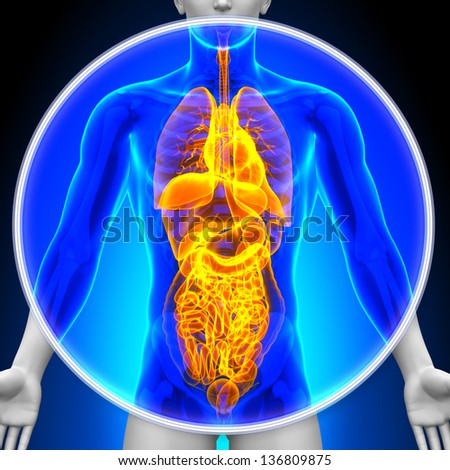 Medical X-Ray Scan - All Organs - stock photo